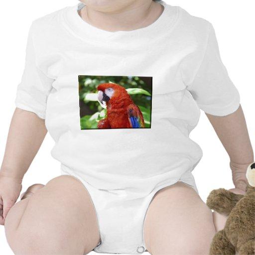 Macaw del escarlata traje de bebé