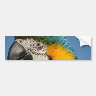 Macaw del guarda pegatina para auto