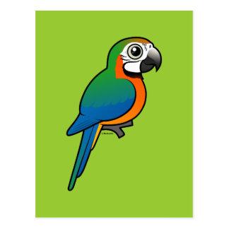 Macaw del Harlequin Tarjeta Postal