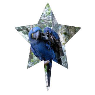 Macaw del jacinto decoraciones de tartas