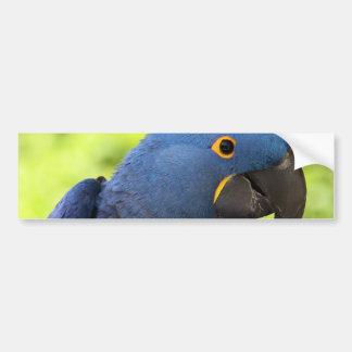 Macaw del jacinto pegatina de parachoque
