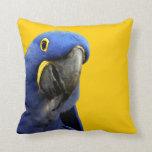 Macaw del jacinto cojin