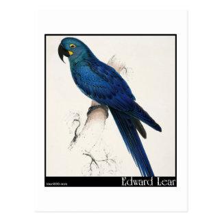 Macaw del jacinto de Edward Lear Postal