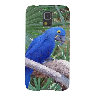Macaw del jacinto fundas de galaxy s5