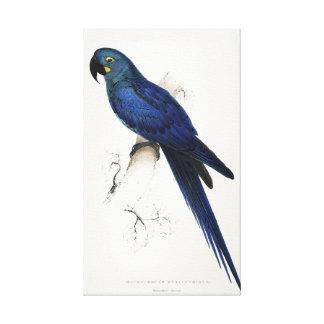 Macaw del jacinto lona envuelta para galerias