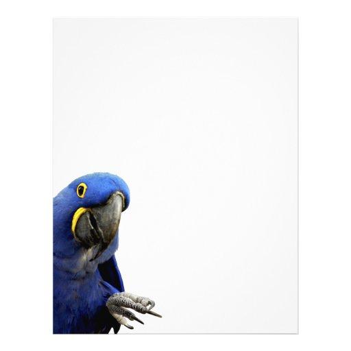 Macaw del jacinto membretes personalizados