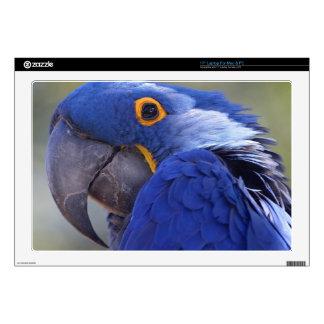 Macaw del jacinto portátil skin