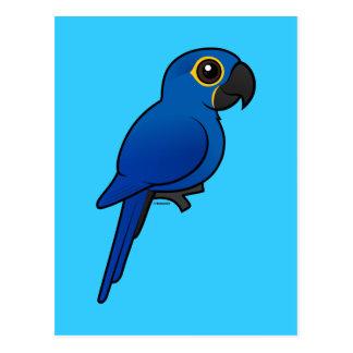 Macaw del jacinto tarjetas postales