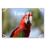 Macaw del rojo del escarlata