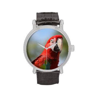 Macaw del rojo del escarlata relojes