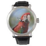 Macaw del rojo del escarlata reloj de mano