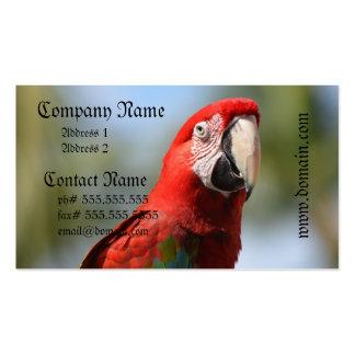 Macaw del rojo del escarlata tarjetas de visita