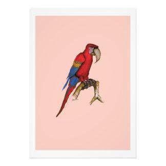 macaw del scarlett, fernandes tony fotografía
