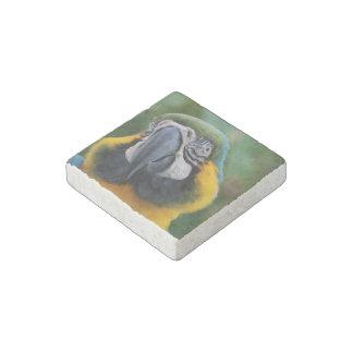 Macaw dulce del azul y del oro imán de piedra
