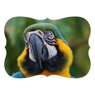 Macaw dulce del azul y del oro invitación 12,7 x 17,8 cm