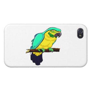 Macaw en rama iPhone 4/4S carcasas