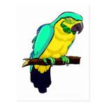 Macaw en rama postal