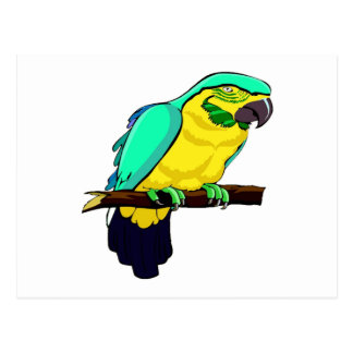 Macaw en rama postales