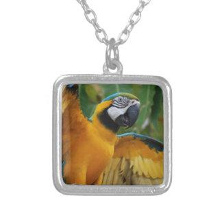 Macaw entretenido del azul y del oro colgante