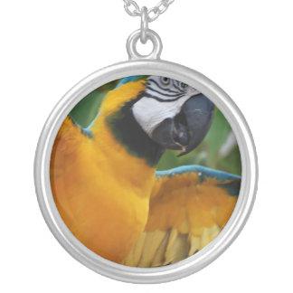 Macaw entretenido del azul y del oro joyería