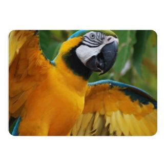 Macaw entretenido del azul y del oro invitación 12,7 x 17,8 cm