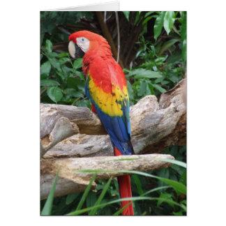 Macaw escénico del escarlata tarjeta de felicitación