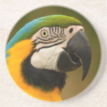macaw face beverage coaster