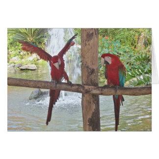 Macaw Fun Card