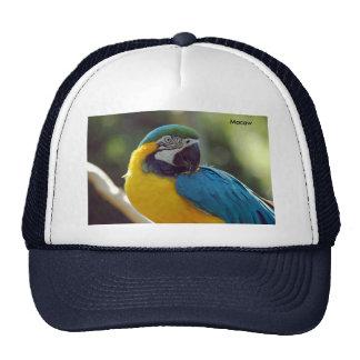 Macaw Gorro De Camionero