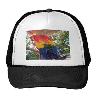 macaw gorra