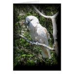 Macaw Greeting Card