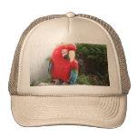 macaw hats
