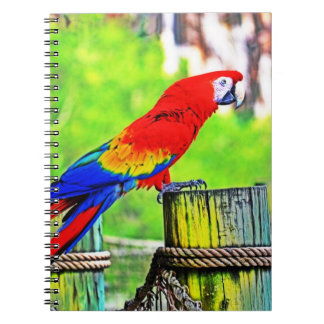 macaw hdr saturated bird image notebook