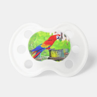 macaw hdr saturated bird image pacifier