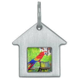 macaw hdr saturated bird image pet name tag
