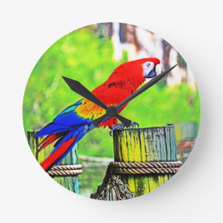 macaw hdr saturated bird image round clock