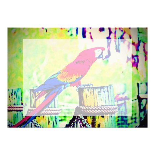 macaw hdr saturated bird image vignetted custom invitations