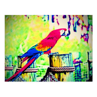 macaw hdr saturated bird image vignetted postcard