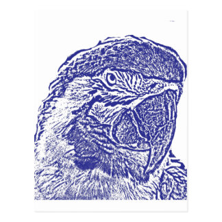 macaw head view graphic blue outline parrot postcard