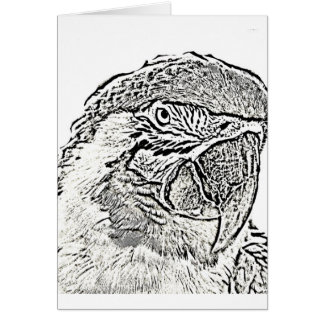 macaw head view graphic outline parrot card