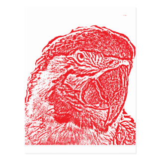 macaw head view graphic red outline parrot postcard