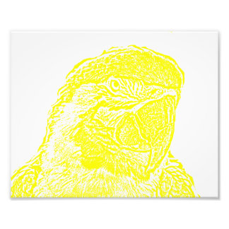 macaw head view graphic yellow outline parrot photo print