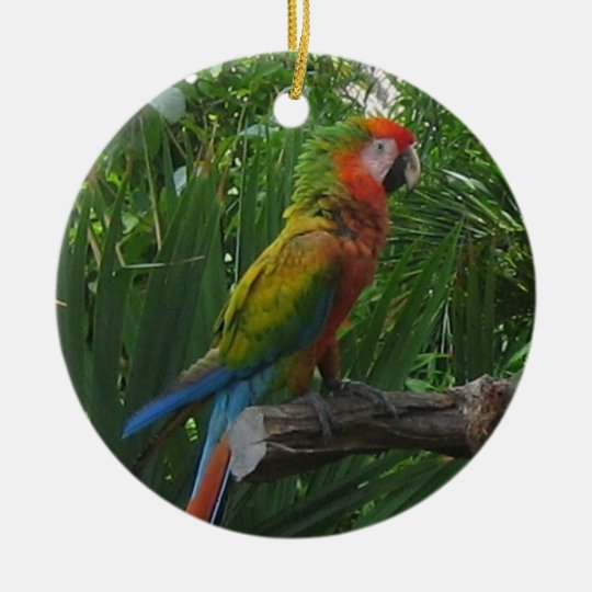 Macaw in Mexico Ornament
