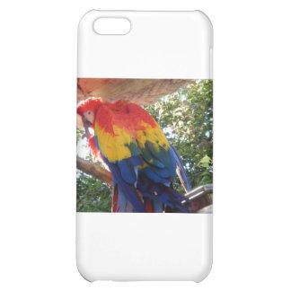 macaw iPhone 5C case