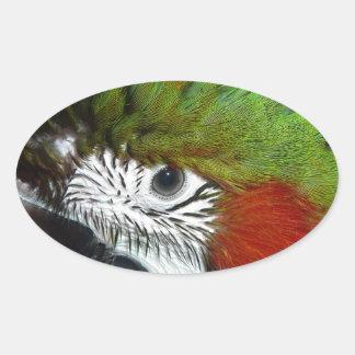 Macaw joven del jubileo colcomanias de oval