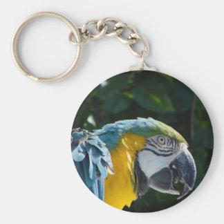 Macaw Key Chain