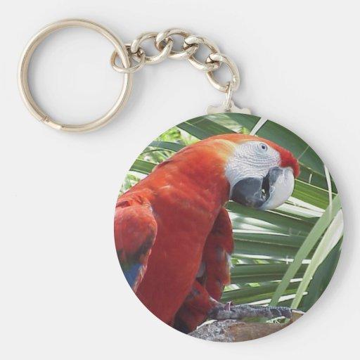 Macaw Llaveros