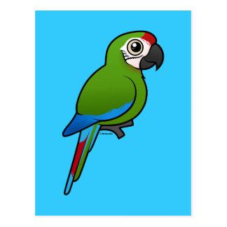 Macaw militar tarjeta postal