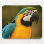 macaw mouse mats