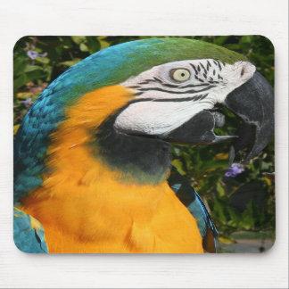 Macaw Mousepad del azul y del oro Tapetes De Ratón
